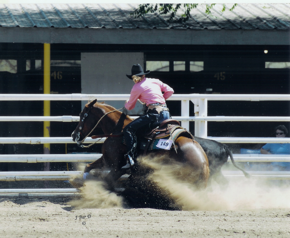 Sue down the fence Jill Cook cow horse